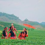 3 reasons why Moc Chau is a travel option near Hanoi