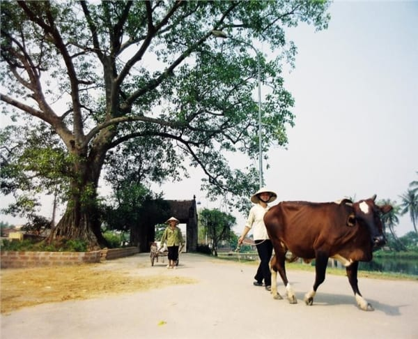 Duong Lam Ancient Village 735